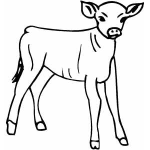 Pictures of Calf Drawing For Kids - #rock-cafe