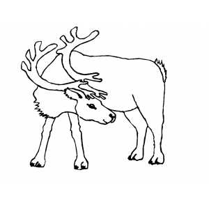 Searching Reindeer Coloring Sheet