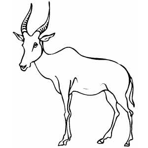 Thin Antelope Coloring Sheet