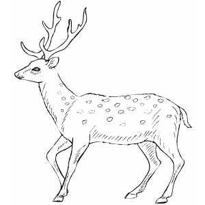 Walking Deer Coloring Sheet