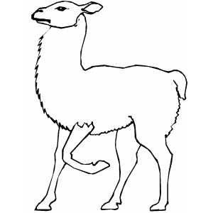 walking llama coloring sheet