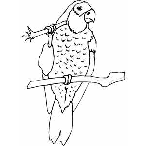 Amazon Eating Parrot Coloring Sheet