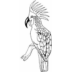 Big Parrot Coloring Sheet