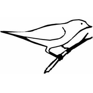 Bird Sitting On Branch Coloring Sheet