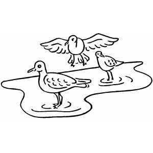 Birds On Water Coloring Sheet