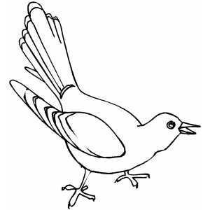 Common Cuckoo Coloring Sheet