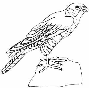 Eagle On Stone Coloring Sheet