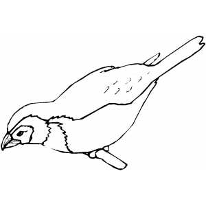 Finch Coloring Sheet