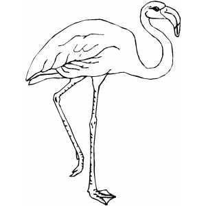 Flamingo On One Leg Coloring Sheet