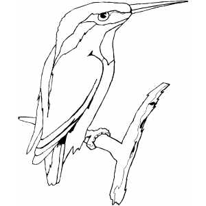 Kingfisher On Branch Coloring Sheet