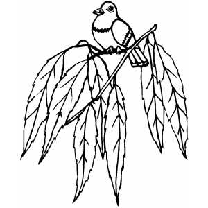 Little Bird On Branch With Leafes Coloring Sheet