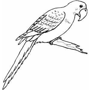 Macaw On Branch Coloring Sheet