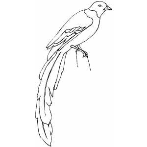 Magpie Coloring Sheet