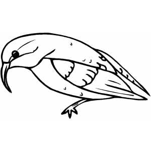 Oriole Coloring Sheet