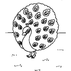 Peacock Coloring Sheet