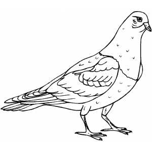 Pigeon Coloring Sheet
