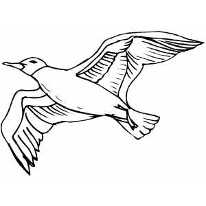 Seagull Coloring Sheet