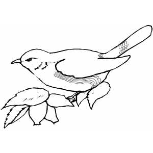 Severe Perched Bird Coloring Sheet
