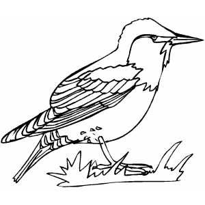 Starling Coloring Sheet