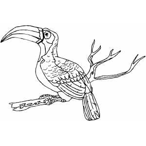 Toucan On Branch Coloring Sheet