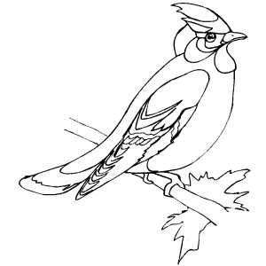Waxwing Coloring Sheet