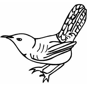 Wren Coloring Sheet