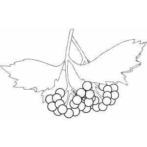 Berries On Branch Coloring Sheet