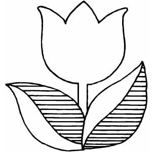Tulip Flower Coloring Sheet