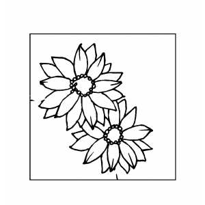 Two Flowers On Cactus Coloring Sheet