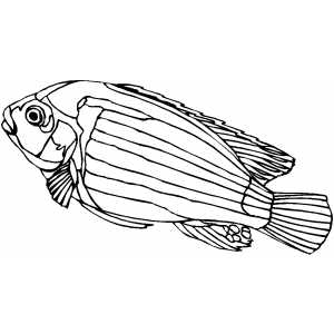 African Cichlid Coloring Sheet