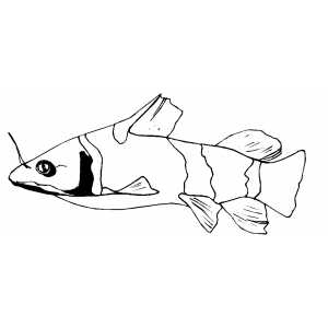 Catfish Coloring Sheet