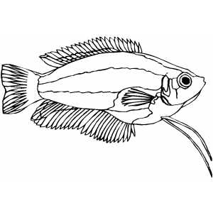 Dwarf Gourami Coloring Sheet