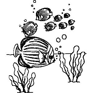 Marine Angelfish Coloring Sheet