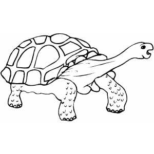 Walking Tortoise Coloring Sheet