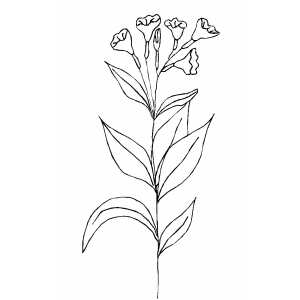 Bells Flowers Coloring Sheet