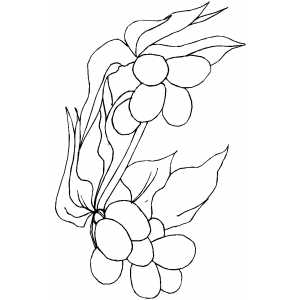 Berryflowers Coloring Sheet