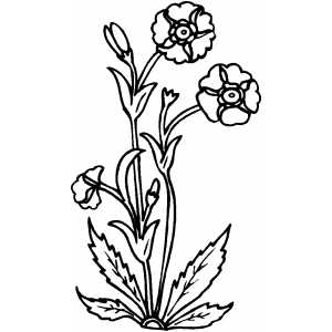 Flowers10 Coloring Sheet