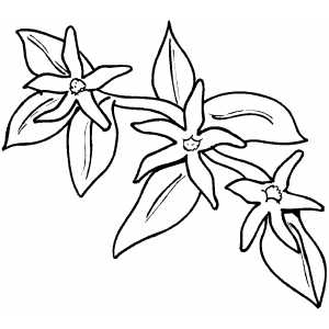 Flowers21 Coloring Sheet