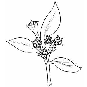 Flowers24 Coloring Sheet