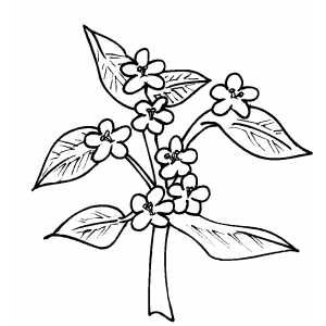 Flowers25 Coloring Sheet