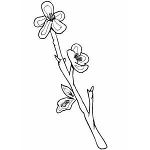 Flowers32 Coloring Sheet