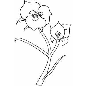 Flowers37 Coloring Sheet