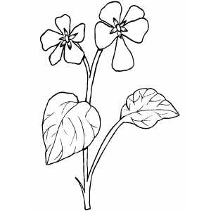 Flowers38 Coloring Sheet
