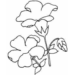 Flowers39 Coloring Sheet