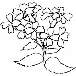 Flowers40 Coloring Sheet