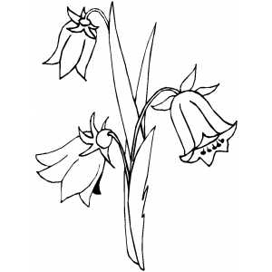 Flowers41 Coloring Sheet