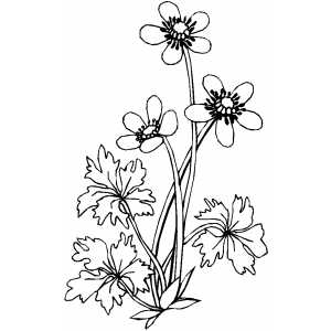 Flowers47 Coloring Sheet