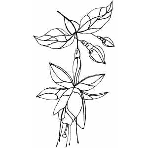 Flowers50 Coloring Sheet