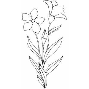 Flowers52 Coloring Sheet