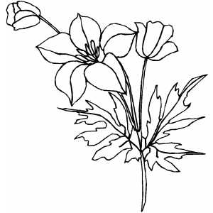 Flowers55 Coloring Sheet